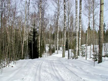A skiing track in Nuuksio  National Park - Last view 2020-12-02