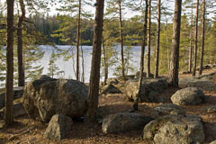 Boulders on the bank of Hauklampi - Last view 2020-09-24