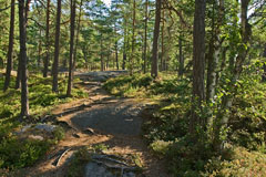 Woods on the rock of Kasavuori, Soukka - Last view 2021-02-24