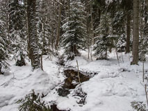 A small brook in the wintry forest - Last view 2021-02-24