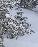 Soft new snow on trees and ground - Last view 2021-02-24